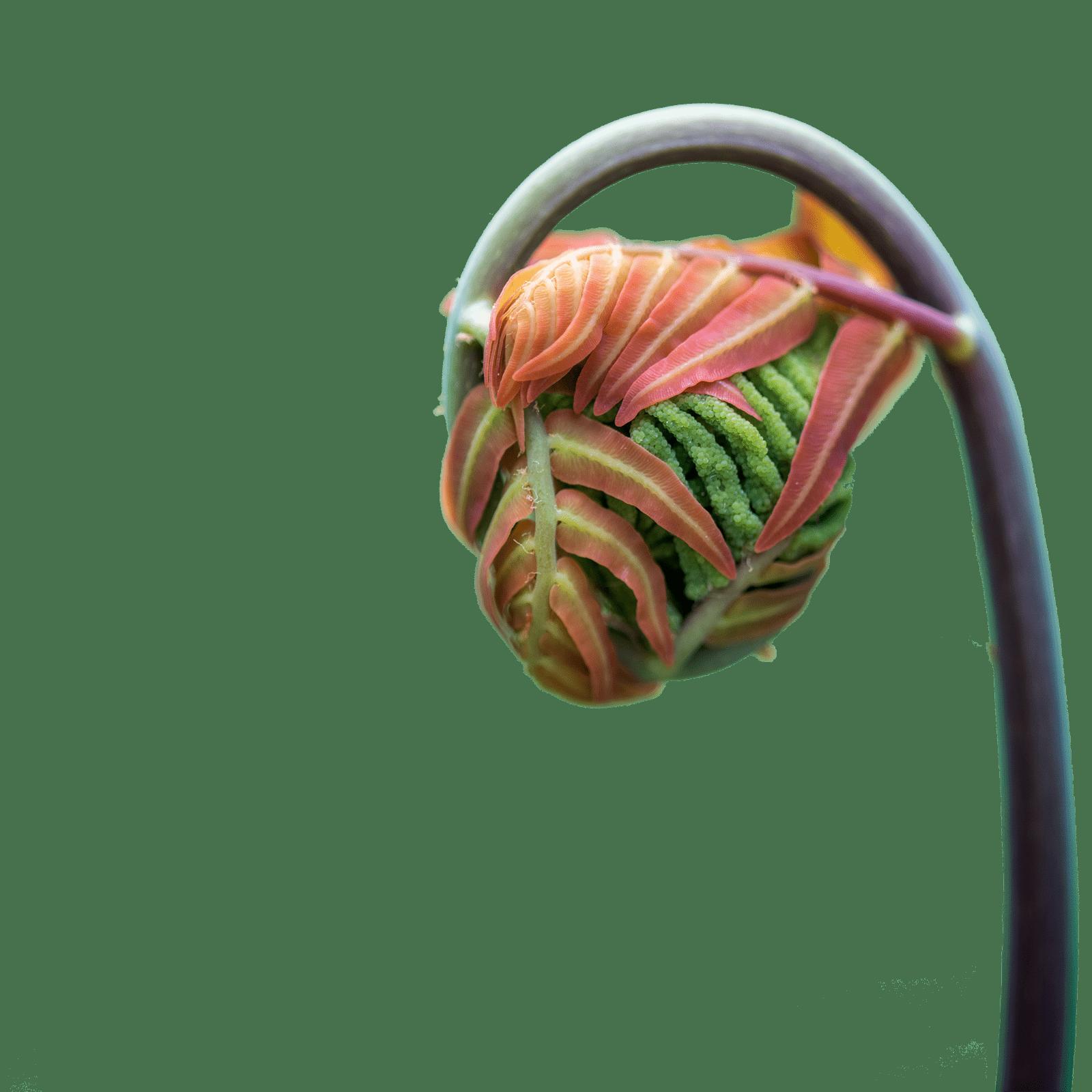 cropped - Growing Leaf