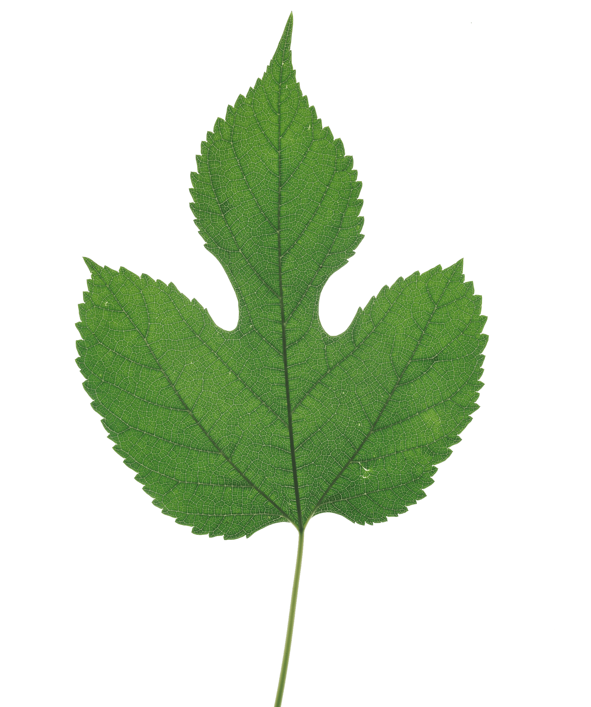 Striking Plant 22